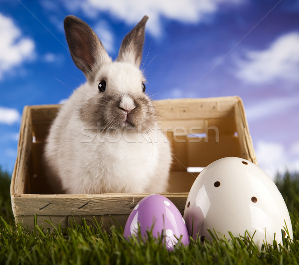 Rabbit in grass Stock photo © JanPietruszka