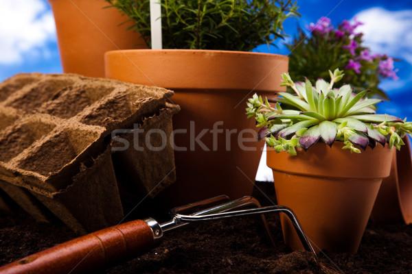 Ogród roślin żywy jasne wiosna kwiat Zdjęcia stock © JanPietruszka