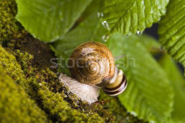 Caracol naturalismo cores jardim verde folhas Foto stock © JanPietruszka