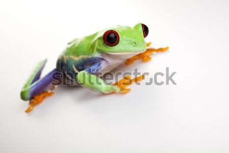 Red eye frog, funny bright tone concept Stock photo © JanPietruszka