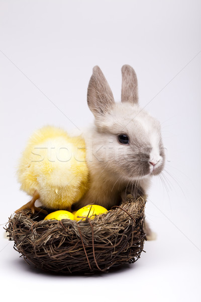 Rabbit on chick Stock photo © JanPietruszka