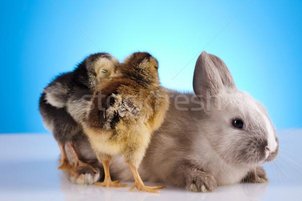 Csirke nyuszi húsvét fű vicces állat Stock fotó © JanPietruszka