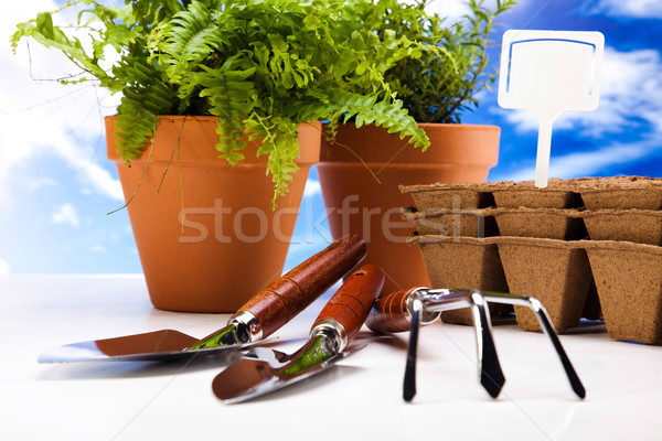 Set of garden tools, vivid bright springtime concept Stock photo © JanPietruszka