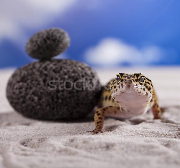 Lagartixa réptil lagarto olho caminhada branco Foto stock © JanPietruszka