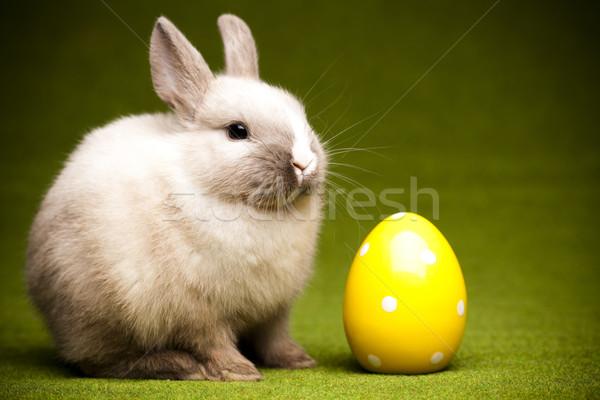 Kicsi nyuszi húsvét tavasz fű boldog Stock fotó © JanPietruszka