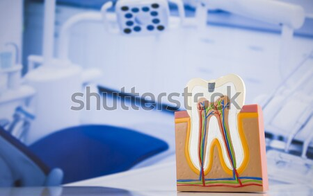 Human tooth structure Stock photo © JanPietruszka