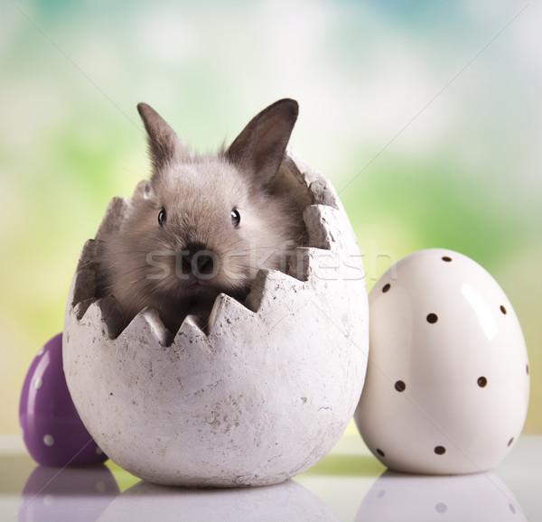 Easter bunny with eggs  Stock photo © JanPietruszka