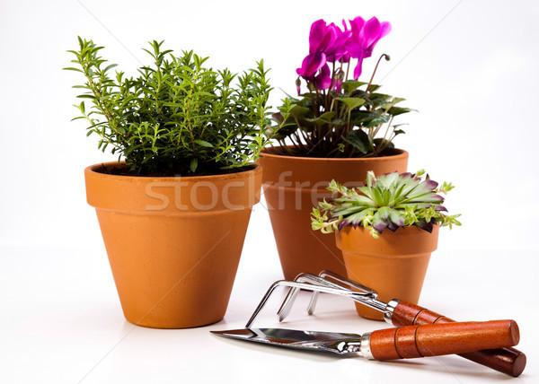 яркий ярко весна цветок лист Сток-фото © JanPietruszka