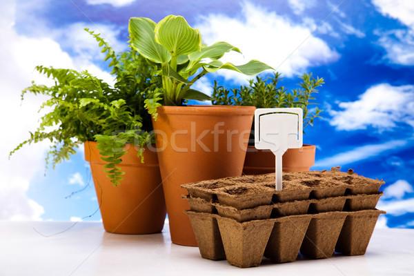 Foto stock: Flores · jardín · herramientas · cielo · azul · hierba · naturaleza