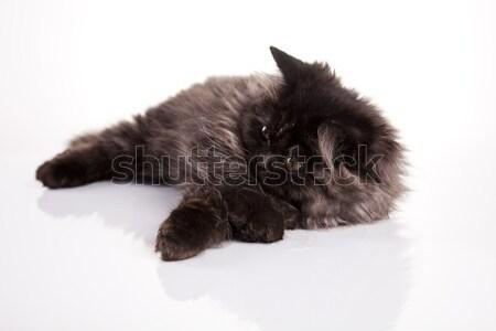Cica vicces kiscica szem szemek lábak Stock fotó © JanPietruszka