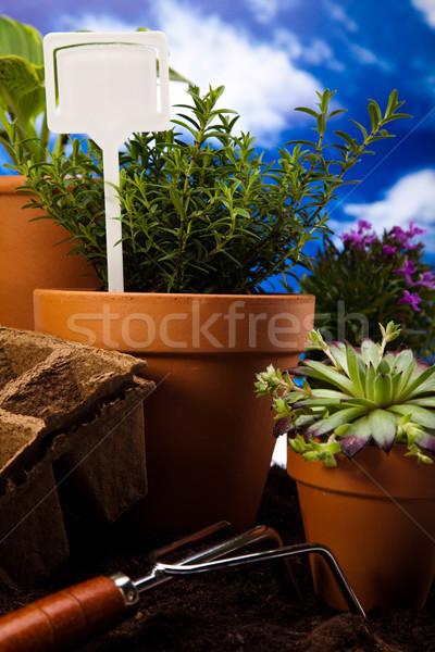 Сток-фото: саду · инструменты · яркий · ярко · весна · трава