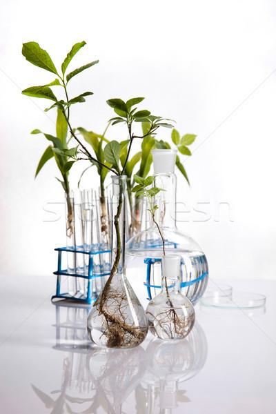 Science experiment with plant laboratory Stock photo © JanPietruszka