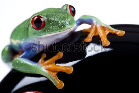 Vermelho olho folha colorido natureza Foto stock © JanPietruszka