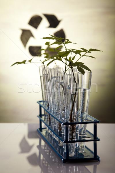Flora laboratorium natuur geneeskunde plant lab Stockfoto © JanPietruszka