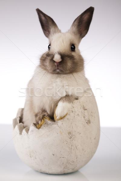 Rabbit on white background Stock photo © JanPietruszka