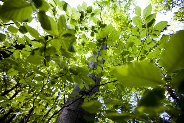 Levelek természetes tavasz fény levél keret Stock fotó © JanPietruszka