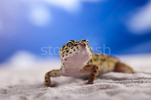 Geco cielo azul ojo caminando blanco animales Foto stock © JanPietruszka