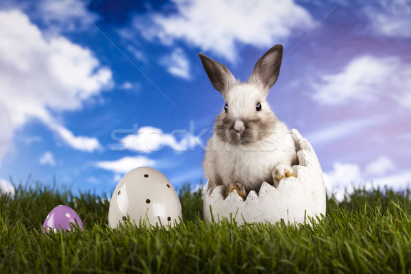 Spring Baby Bunny And Green Grass Stock Photo C Sebastian Duda Janpietruszka 2532033 Stockfresh