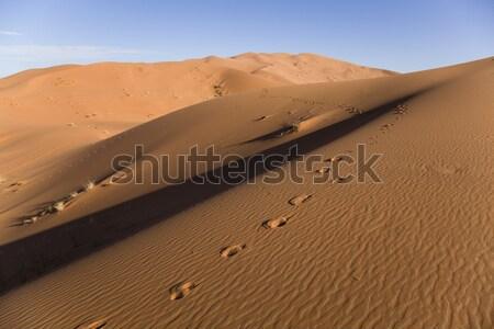 Landscape of desert, colorful vibrant travel theme Stock photo © JanPietruszka