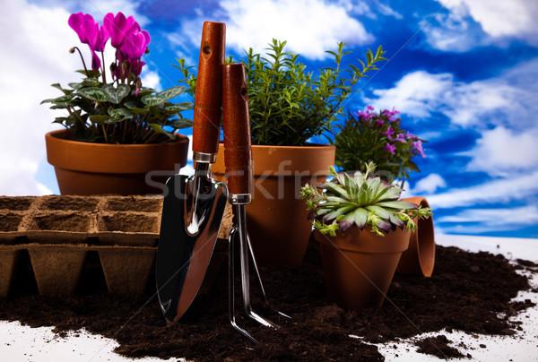 Kertészkedés felszerlés növények élénk fényes tavasz Stock fotó © JanPietruszka