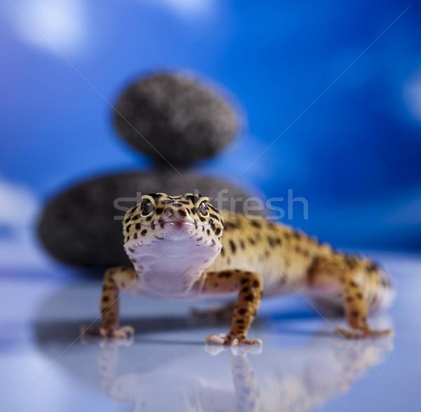 Mały gekon gad jaszczurka oka spaceru Zdjęcia stock © JanPietruszka