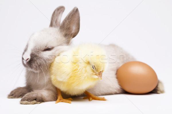 Chick vacaciones Pascua bebé aves pollo Foto stock © JanPietruszka