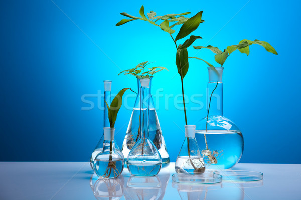 Plant in a test tube in hands of the scientist Stock photo © JanPietruszka