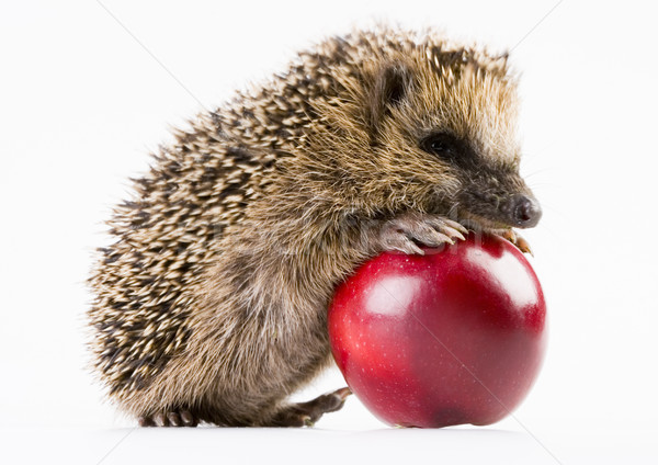 Hedgehog with apple, bright colorful vivid theme Stock photo © JanPietruszka