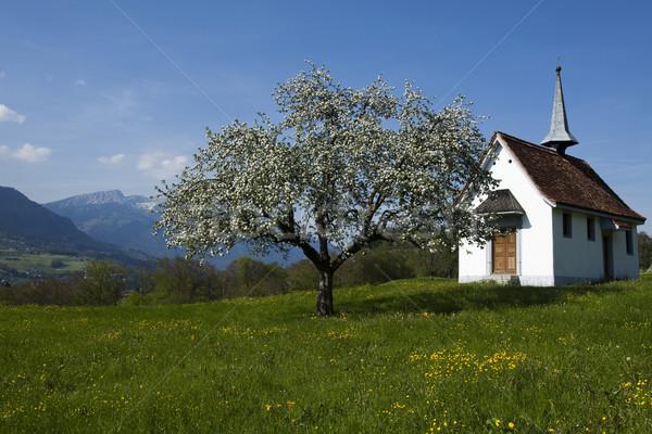 Voorjaar landschap bergen bloemen natuur berg Stockfoto © JanPietruszka