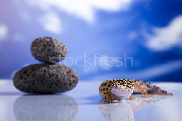 Gecko reptile lézard oeil marche blanche Photo stock © JanPietruszka