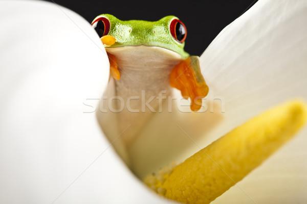 лягушка джунгли красочный природы лист красный Сток-фото © JanPietruszka
