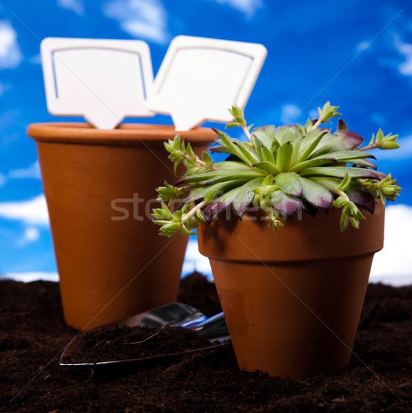 саду инструменты яркий ярко весна трава Сток-фото © JanPietruszka