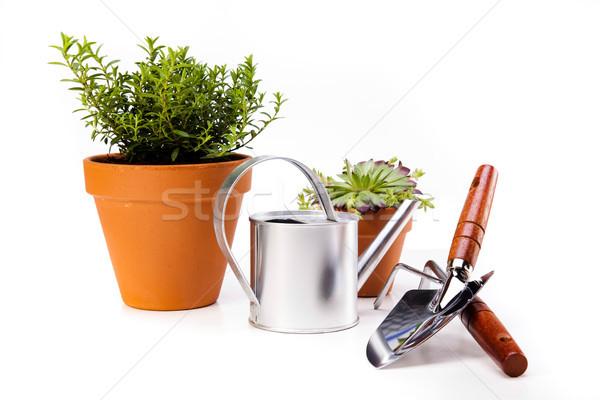 Tuinieren tijd tuin levendig heldere Stockfoto © JanPietruszka
