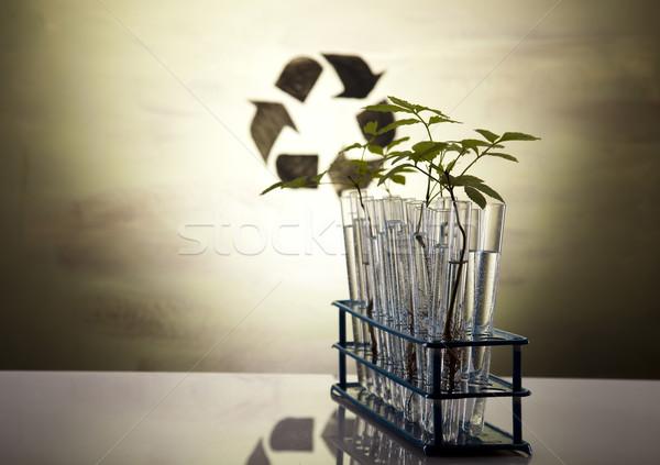 Planta laboratório natureza medicina lab química Foto stock © JanPietruszka