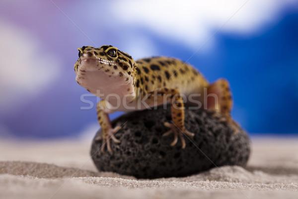 Pequeno lagartixa réptil lagarto olho caminhada Foto stock © JanPietruszka