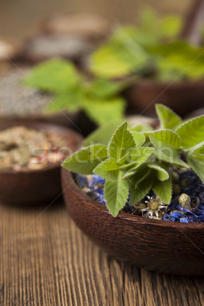 Fresh medicinal herbs on wooden background Stock photo © JanPietruszka