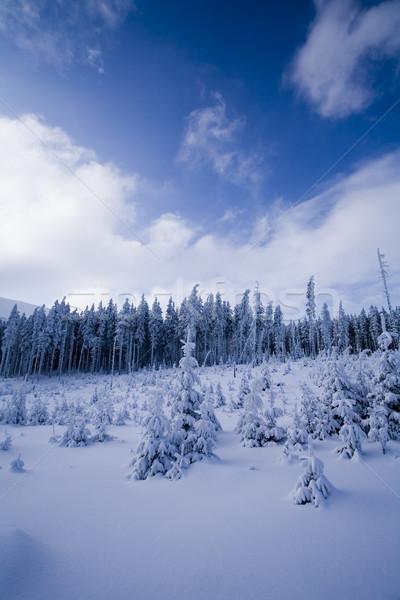 Winter Mountains, bright colorful vivid theme Stock photo © JanPietruszka