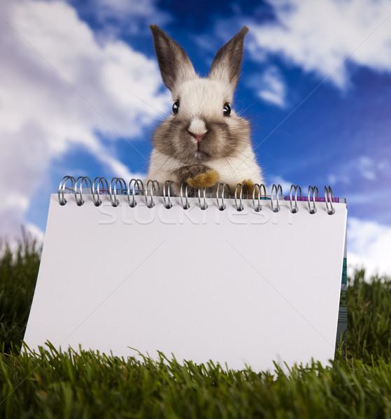 Copy space üres papír nyuszi állat húsvét tavasz Stock fotó © JanPietruszka
