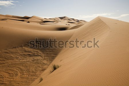 Sahara woestijn kleurrijk trillend reizen landschap Stockfoto © JanPietruszka