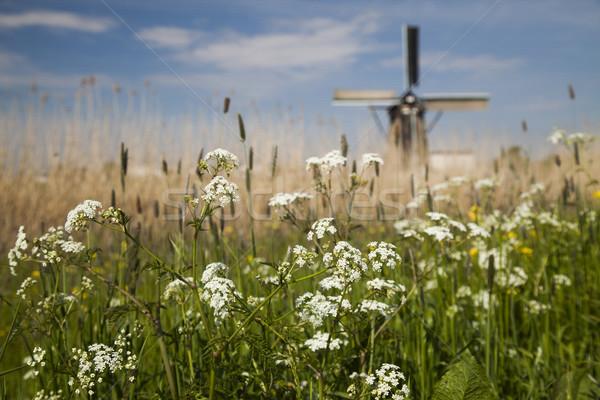 伝統的な 古い オランダ 風車 空 草 ストックフォト © JanPietruszka