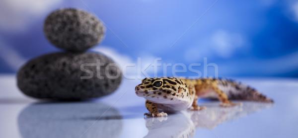 Klein gekko reptiel hagedis oog lopen Stockfoto © JanPietruszka