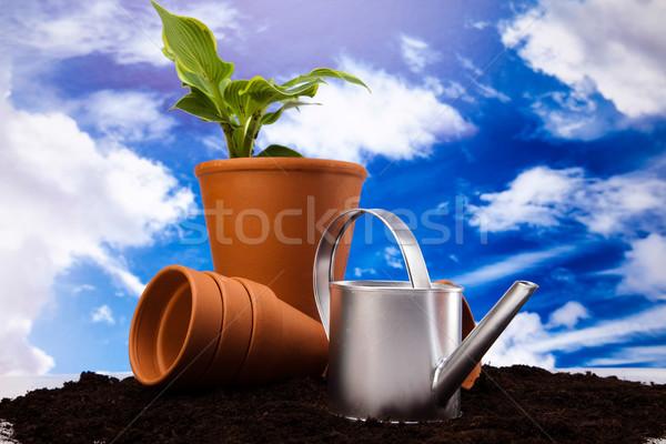 Kerti eszközök élénk fényes tavasz virág levél Stock fotó © JanPietruszka