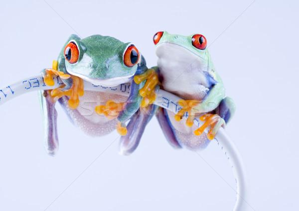Сток-фото: экзотический · лягушка · красочный · природы · красный · тропические