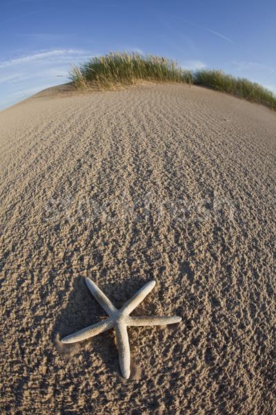 Beach, bright colorful concept background Stock photo © JanPietruszka