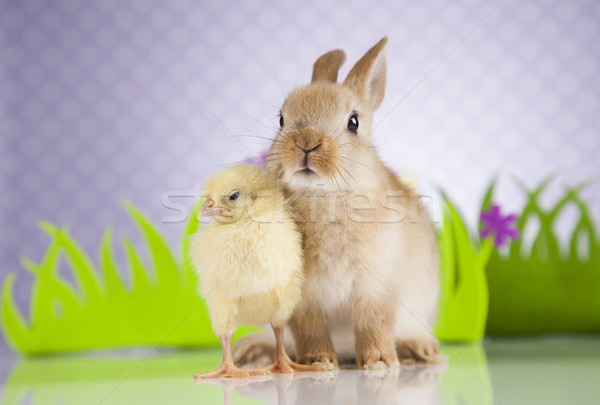 Weinig chick konijn vrolijk pasen bunny gelukkig Stockfoto © JanPietruszka