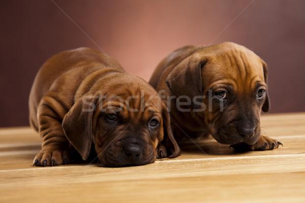 ребенка собаки мало собака молодые грусть Сток-фото © JanPietruszka