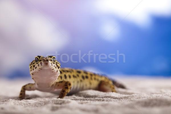Stockfoto: Klein · gekko · reptiel · hagedis · oog · lopen