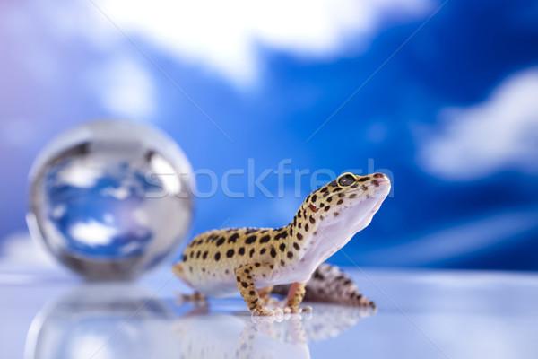 Földgömb gekkó szem sétál fehér állat Stock fotó © JanPietruszka