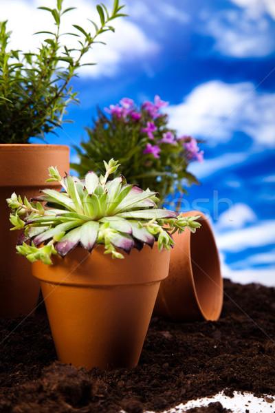 Gardening equipment with plants, vivid bright springtime concept Stock photo © JanPietruszka
