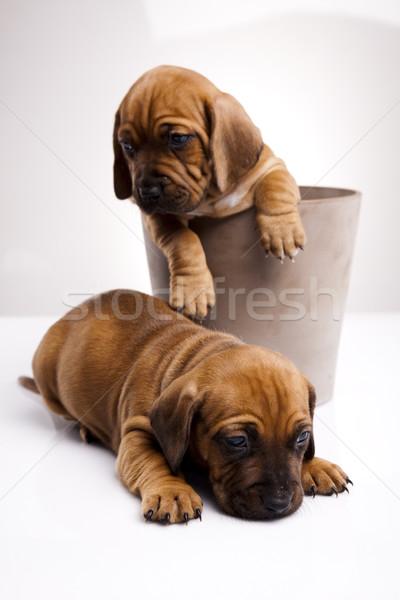 Foto stock: Bebê · cães · pequeno · cão · jovem · tristeza